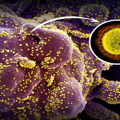 Imunitet na koronu mogao bi trajati godinama, možda čak i decenijama