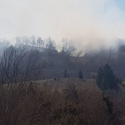 CZIP: Požari širom Crne Gore, za nastalu pustoš niko ne odgovara