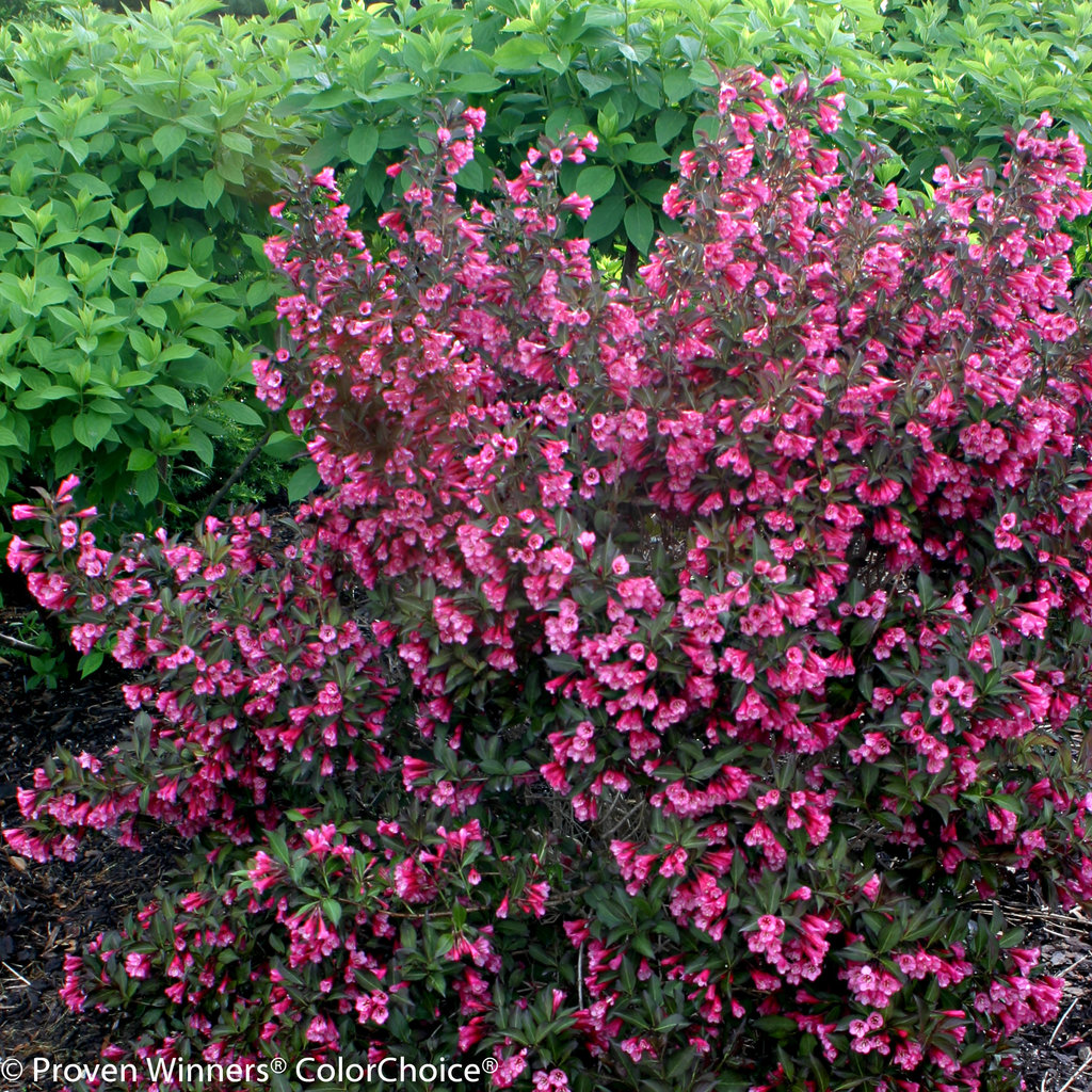 Zone 5b Plants And Shrubs