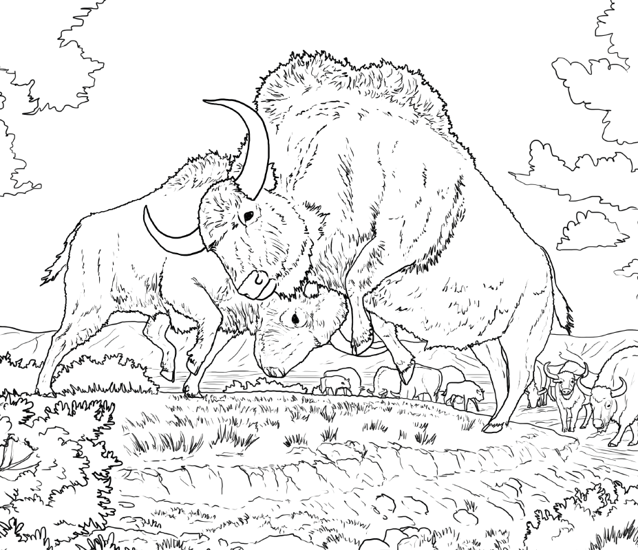Ice Age Bison Colouring Contest