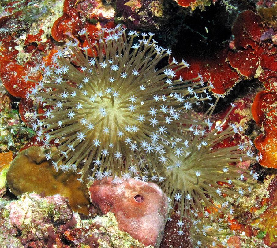 Corals, Romblon Island