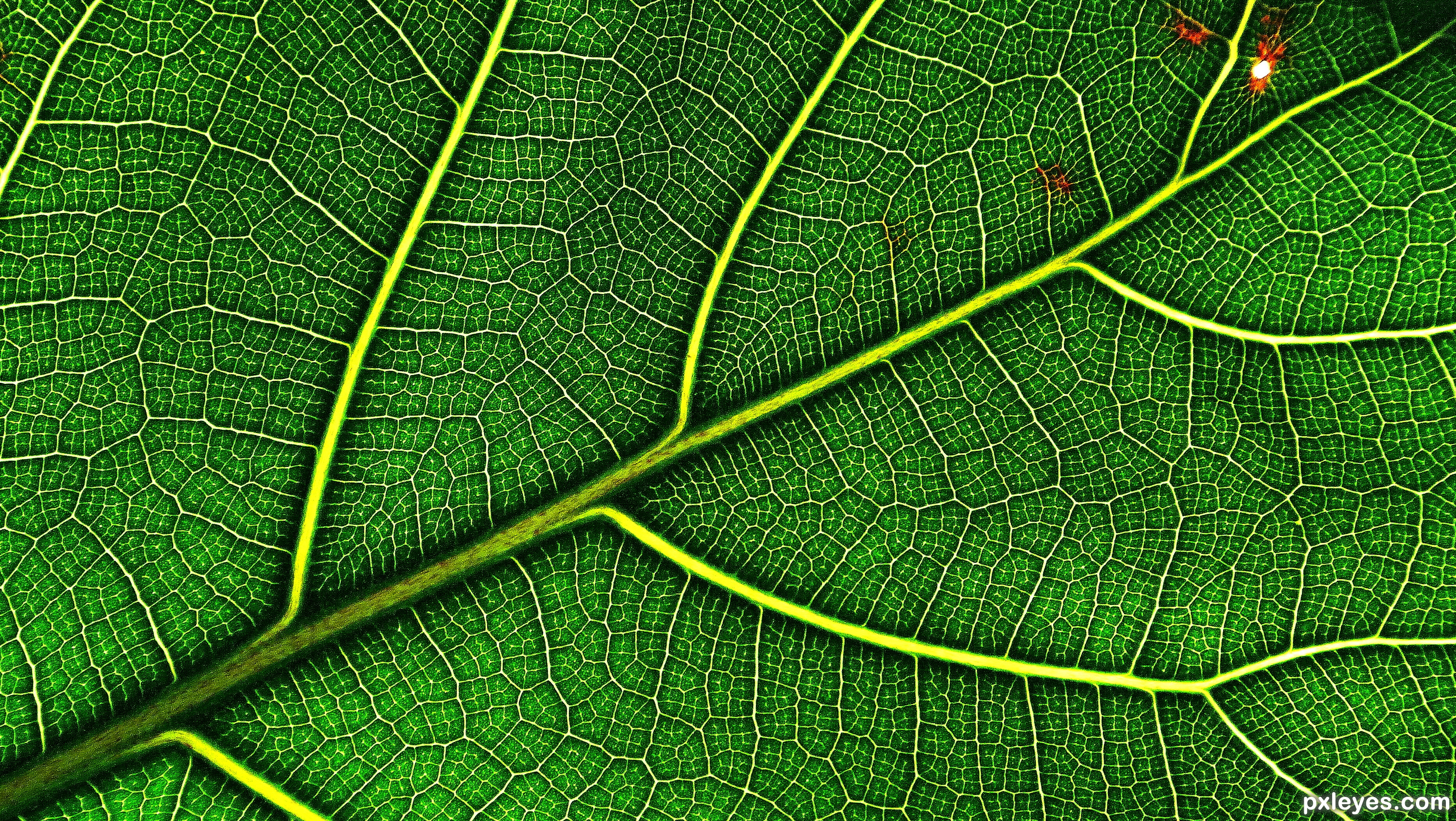 A New Leaf To Turn Picture By Mymindseye For One Leaf