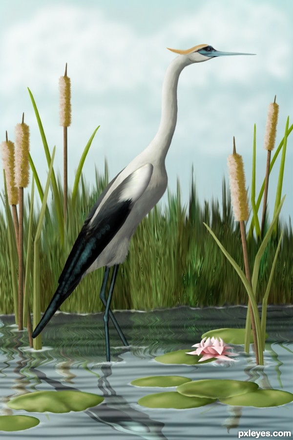 Photoshop Guide The Making Of Crane In Cattails