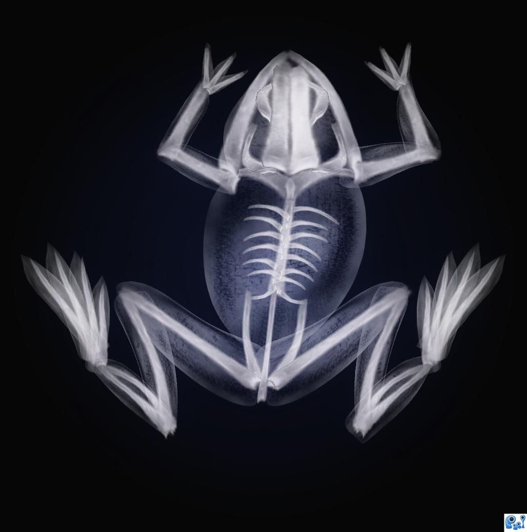 Frog X Ray Picture By Nasirkhan For X Rays Photoshop