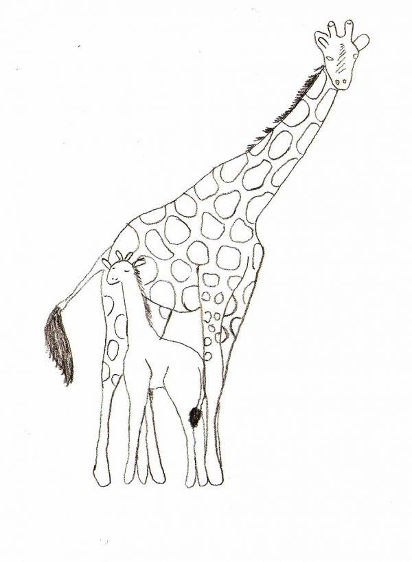Simple Animal Drawings for Beginners
