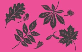 British Tree Illustration