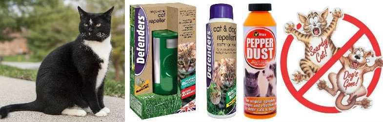 cat repellents to stop cats from pooping on your garden