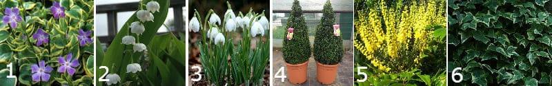 plants for shade including bulbs, perennials, shrubs, climbers