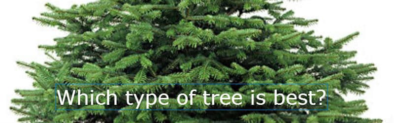 Types of Christmas Tree & How To Choose The Right Type ...