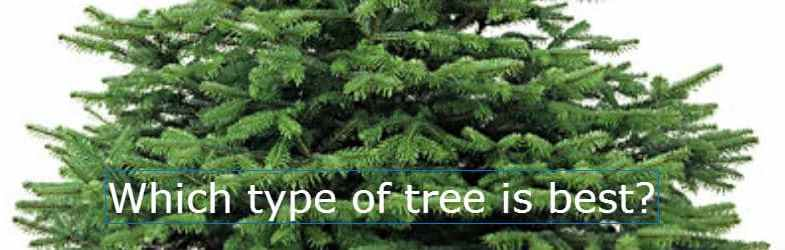 types of christmas tree how to choose the right type - Type Of Christmas Trees