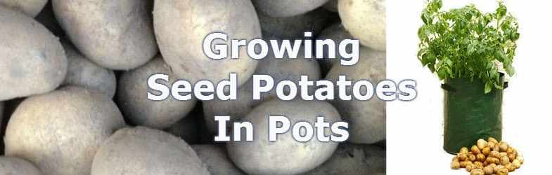 How to grow potatoes in a bag, ideal for smaller gardens
