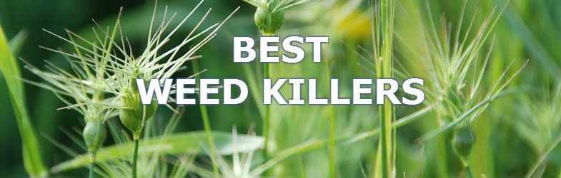 Top 5 Best Weed killers – Learn which you need to get the job done
