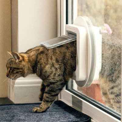 Sureflap microchip cat flap review
