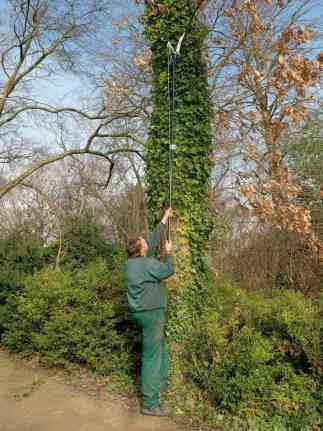 spear & jackson telescopic tree pruner in use