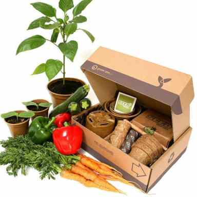 Gift set for anyone starting their first allotment