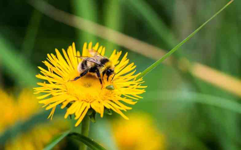 How To Help The Bees, Avoid These 10 Gardening Mistakes!