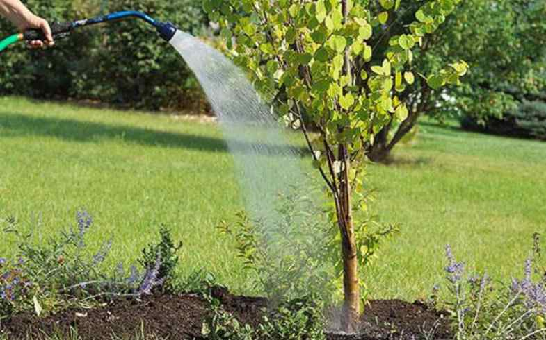 Tree Care and Maintenance Tips When Planting a New Tree