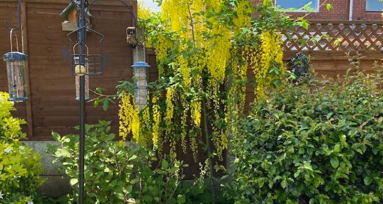10 Best Trees For Small Gardens – Our favourite picks