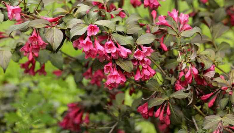 Top 10 shrubs for clay soil – Our favourite picks