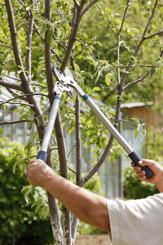 If you have a young, small plum tree and you wanted to grow quickly so that it produces a stronger harvest, you are better off pruning early spring to encourage more vigorous growth
