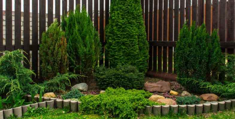 How To Grow and Care For Conifers
