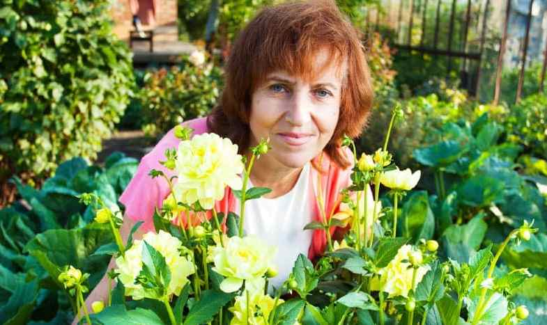 Growing Dahlias – How to plant, grow and care for dahlias
