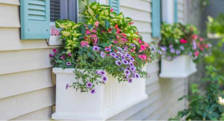 What plants are best for window boxes