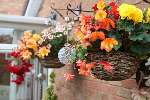 Have a winter set of hanging baskets and winter hanging basket to swap