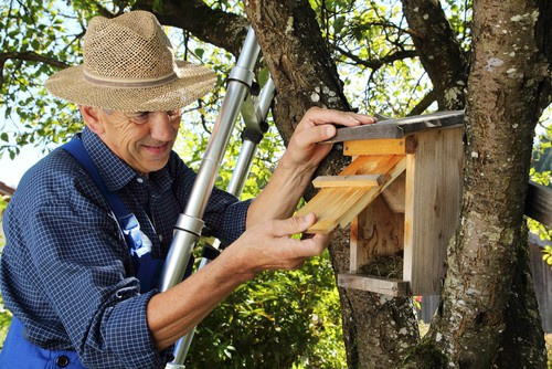 Where to position bird nest boxes