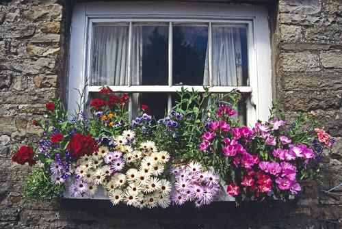 Best Plants for Window Box - window box planted