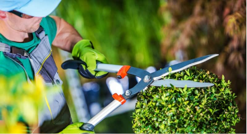 5 Best Topiary Shears for Clipping and Trimming Topiary Plants