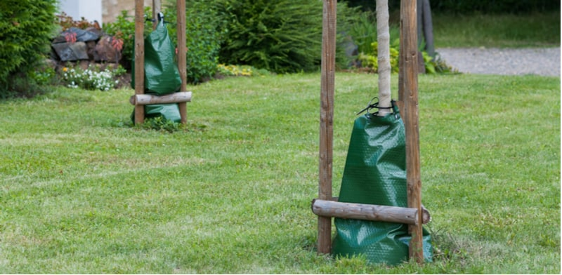 Best Tree Watering Kits and Systems to Automate Watering Newly Planted Trees