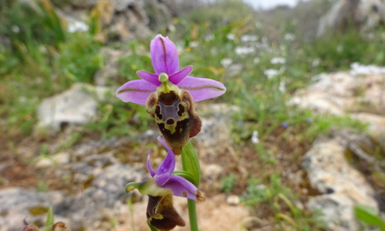 Wild Orchids Holiday Kythira