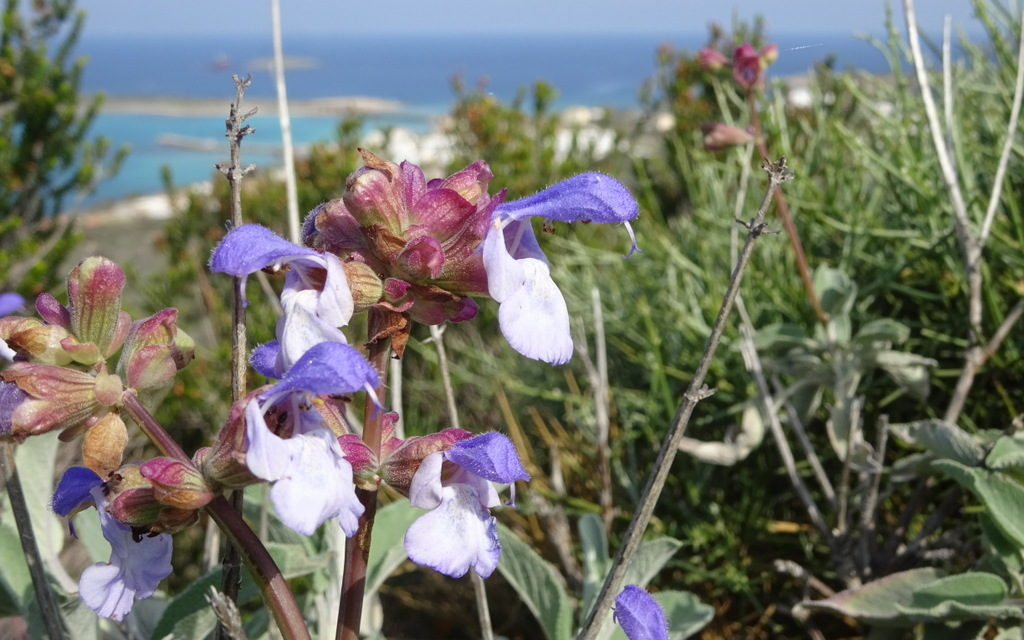 Orchids Holiday Kythira