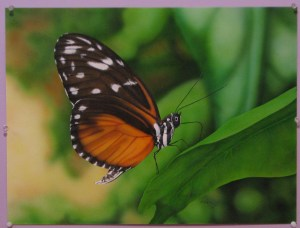 butterfly airbrush