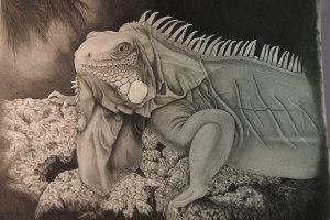 Iguana artwork