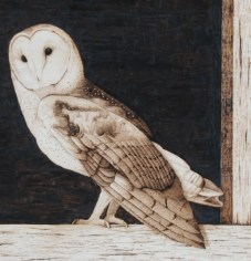 Barn Owl wood burning