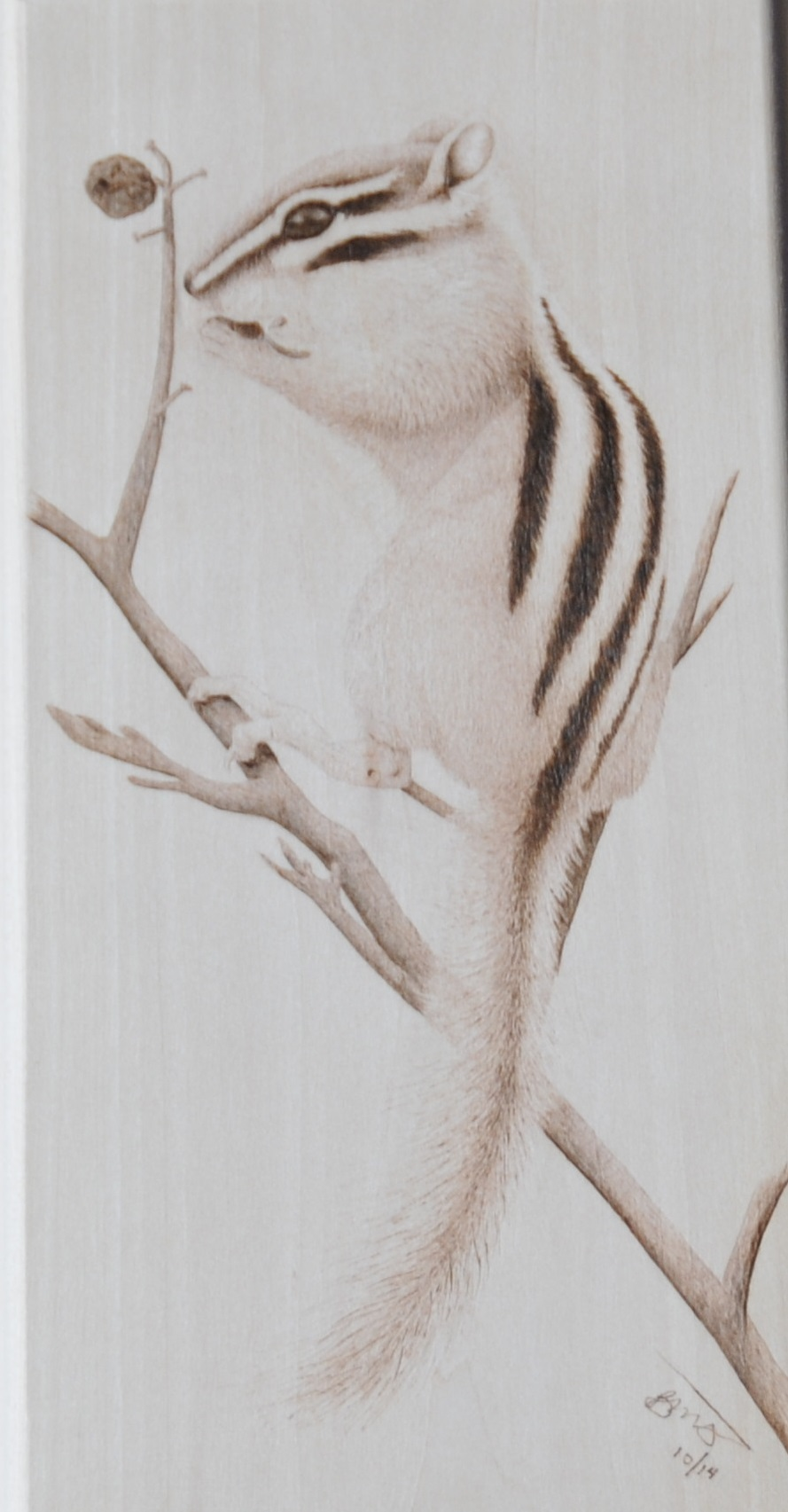 Chipmunk pyrography