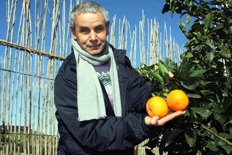 Orangenfarmer Joseph Spiteri