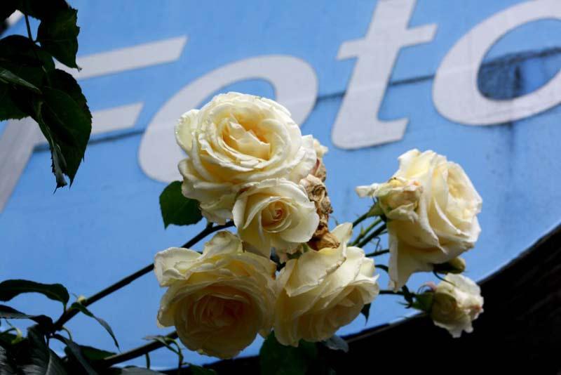 Blumen sind immer ein lohnendes Fotomotiv.