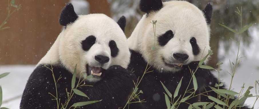 Python Pandas…Eats, shoots and leaves…? | Python For Finance