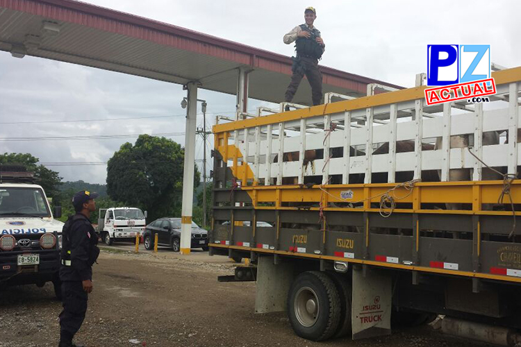 Camión con toros www.pzactual.com