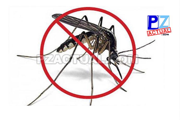 Zancudo Aedes aegypti genera resistencia a insecticidas.