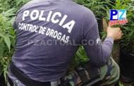 PCD descubre vivero de marihuana hidropónica oculto en montaña  en Buenos Aires de Puntarenas.
