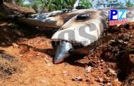 Autoridades ubican restos de aeronave en Osa.