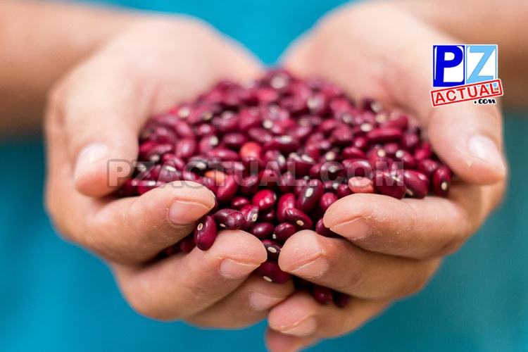 Productores de Región Brunca venderán 11500 kilos de frijol en San José.