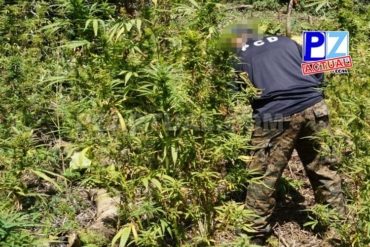 PCD incursiona en montañas costarricenses para eliminar plantíos de marihuana.