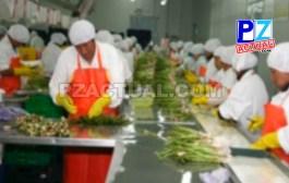 Sector agroindustrial de la zona sur mejora competitividad gracias a alianza estratégica entre el Ministerio de Salud y el INA.