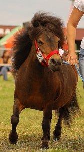 Kuce i konie małe