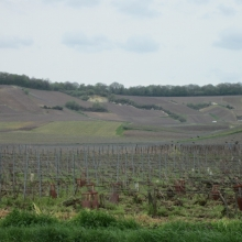 Cote des Blancs outside of Vertus (named for the white wines)